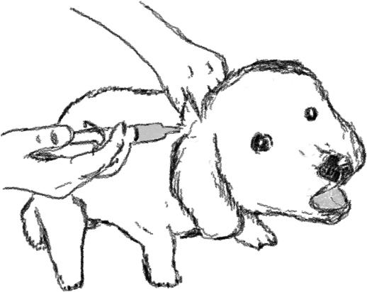 26_dog_%C1ֻ%E7.jpg