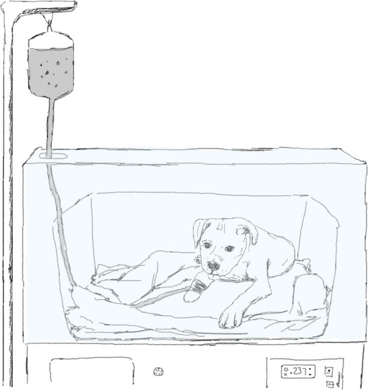141_dog_%B0ݸ%AE.jpg